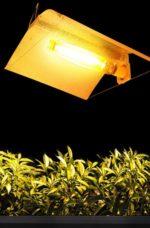 Lampade HPS / HM / CMH